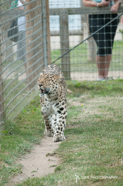 yorkshire_wildlife_park0004