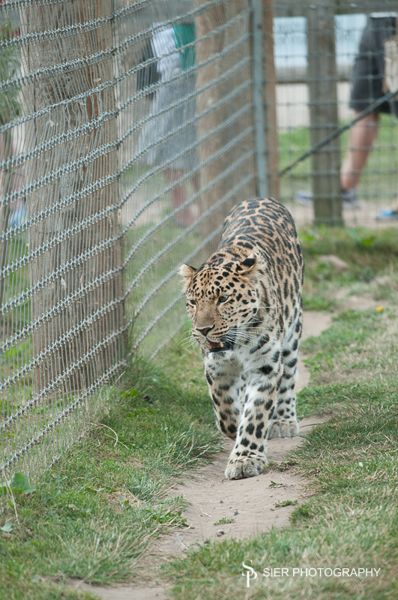 yorkshire_wildlife_park0005