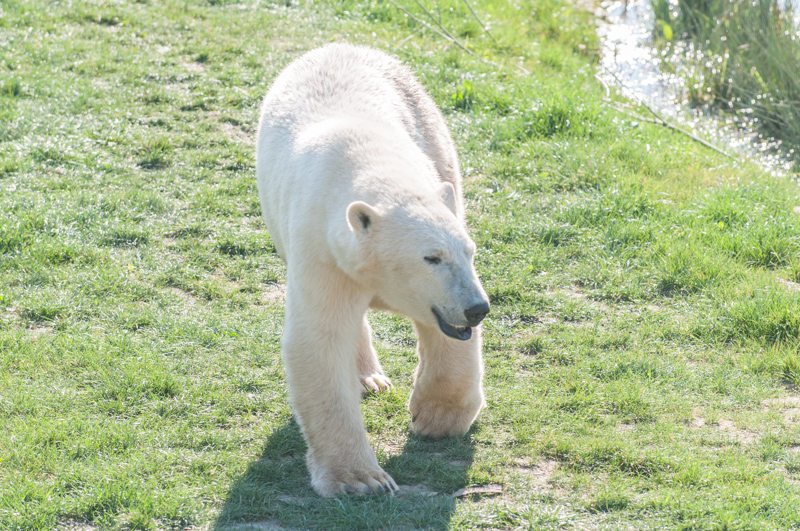 0001_180415_Yorkshire_Wildlife_Park