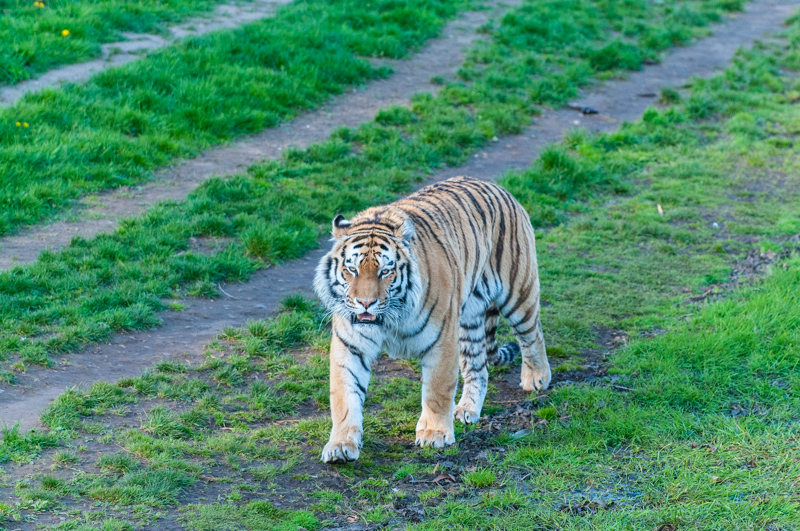 0003_180415_Yorkshire_Wildlife_Park