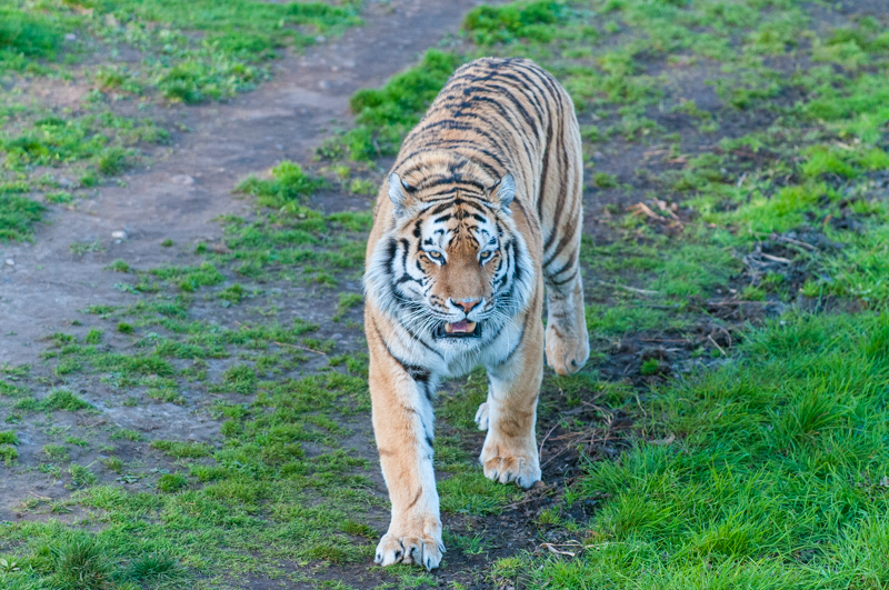 0004_180415_Yorkshire_Wildlife_Park