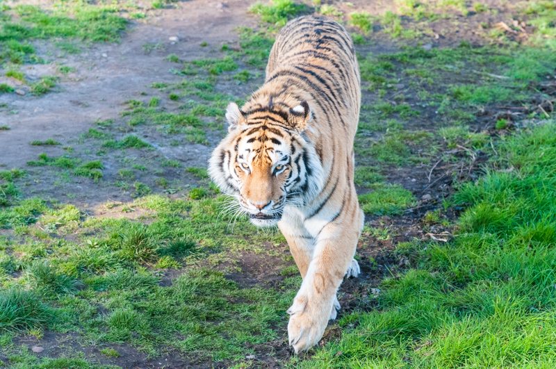 0005_180415_Yorkshire_Wildlife_Park