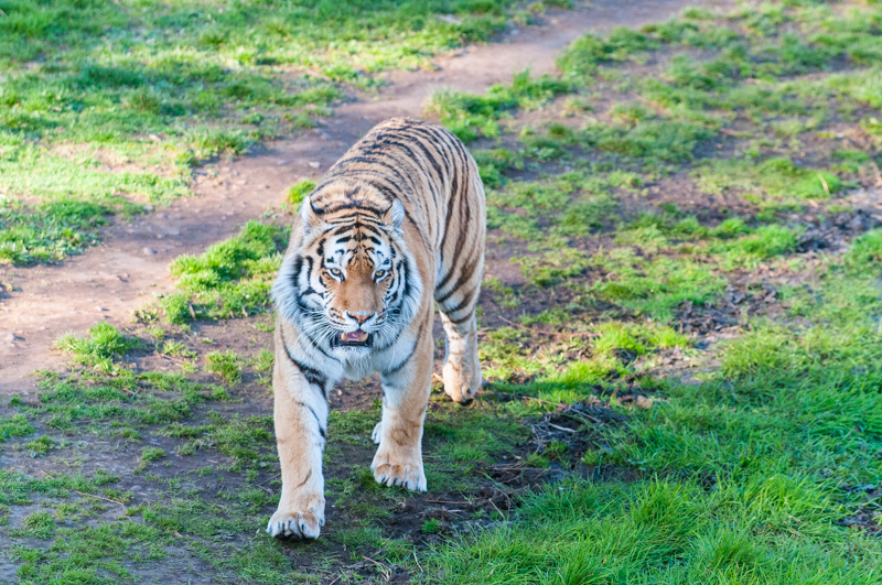 0011_180415_Yorkshire_Wildlife_Park