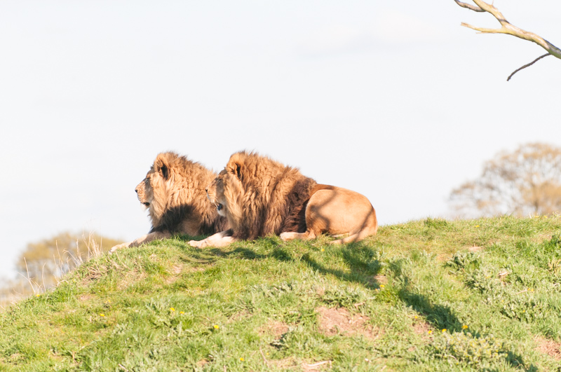 0012_180415_Yorkshire_Wildlife_Park