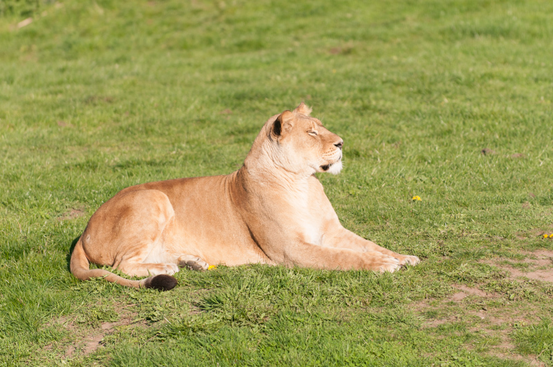 0013_180415_Yorkshire_Wildlife_Park