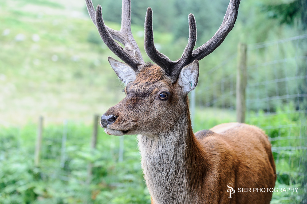 I beleive this stag is called Spike